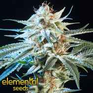 Elemental Seeds Honey Bananas