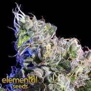 Elemental Seeds Huckle Berry
