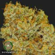 Dynasty Genetics Seeds Huckleberry Cough V2