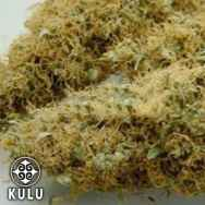 Kulu Seeds Ice Queen