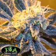TGA Subcool Seeds Kaboom