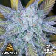 Archive Seeds Lemon Amnesia
