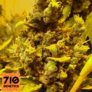 710 Genetics Seeds Lemon AID