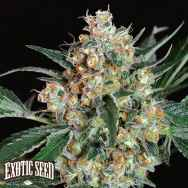 Exotic Seed Lemon Candy
