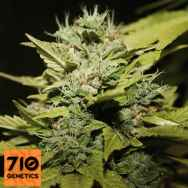 710 Genetics Seeds Lemon & Lime