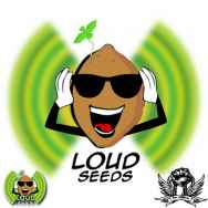 Loud Seeds Loud Sour