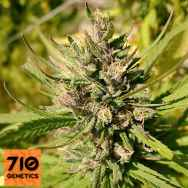 710 Genetics Seeds Majestic Lemon