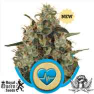 Royal Queen Seeds Medical Mass CBD