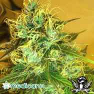 Medicann Seeds Blue Mountain Durban