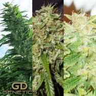 Green Devil Seeds Mix Pack