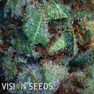 Vision Seeds New York Diesel