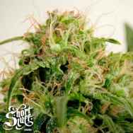 Short Stuff Seeds Onyx
