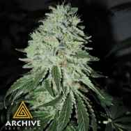 Archive Seeds Oregon Lemons