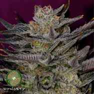 Dynasty Genetics Seeds Oregon Huckleberry IBL 2015