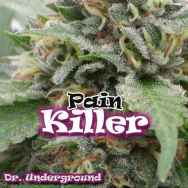 Dr. Underground Seeds Painkiller