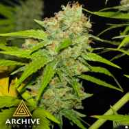 Archive Seeds Poochie Love