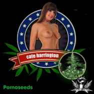 Porno Seeds Cate Harrington