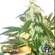 CH9 Seeds Power Plant