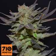 710 Genetics Seeds Purps