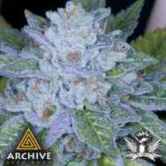 Archive Seeds Race Fuel OG