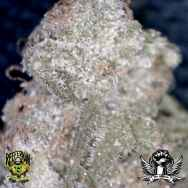 Reeferman Seeds Hashplant #1