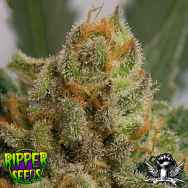 Ripper Seeds Grapegum