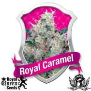 Royal Queen Seeds Royal Caramel