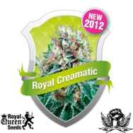 Royal Queen Seeds Royal Creamatic Auto