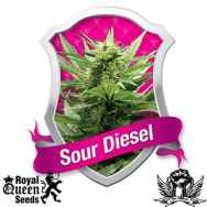 Royal Queen Seeds Sour Diesel