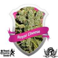 Royal Queen Seeds Royal Cheese