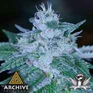 Archive Seeds RudeBoi OG