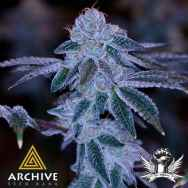 Archive Seeds Samoas