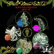 Green House Seeds Sativa Indica Mix D