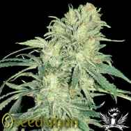 Seedsman Seeds Pot Of Gold