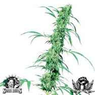 Sensi Seeds Fruity Juice