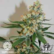 Bodhi Seeds Silver Mountain
