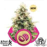 Royal Queen Seeds Somango XL