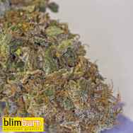 BlimBurn Seeds Sour Diesel