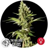 The Bulldog Seeds Sour Diesel