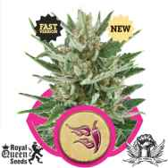 Royal Queen Seeds Speedy Chile Fast