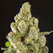 Philosopher Seeds Sugarpop