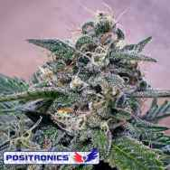 Positronics Seeds Supercheese