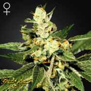 Green House Seeds Train Wreck