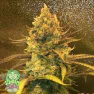 Trichome Jungle Seeds Lillt