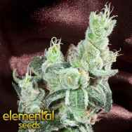 Elemental Seeds TrueBerry