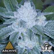 Archive Seeds Valley Girl