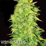 Vision Seeds White Widow Auto