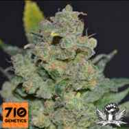 710 Genetics Seeds 710 Stilton AUTO AKA 710 Cheese AUTO