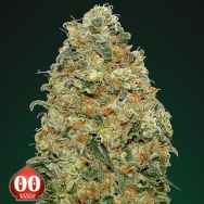 00 Seeds White Widow
