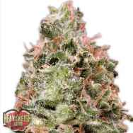 Heavyweight Seeds Waist Deep AUTO